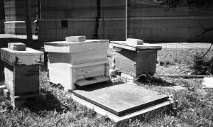 Кошнице са пчелама у порти цркве Св. Александра Невског, 2002. године за време градње новог парохијског дома